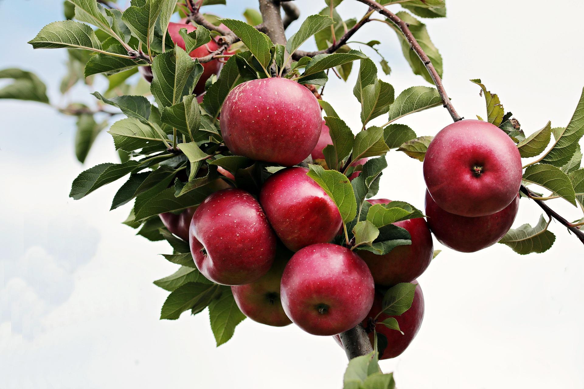 apple2788599_1920