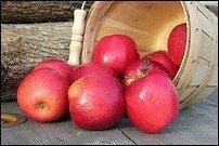 Merton Knave Apple tree