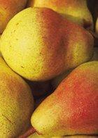 Moonglow cordon pear