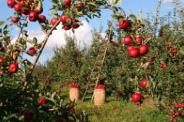 10 Best Fruit Trees for Your Garden