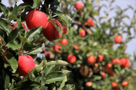 10 Helpful Hints to Start Growing Fruit Trees in Your Garden