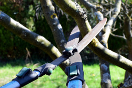 How and When to Prune an Apple Tree